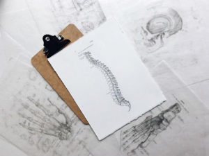Spine diagram on a white paper